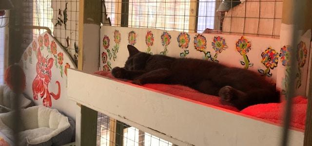Kattepension